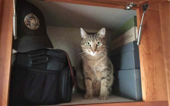 5 Ways To Keep Your Cat Safe And Happy On The Road Pet Benefits