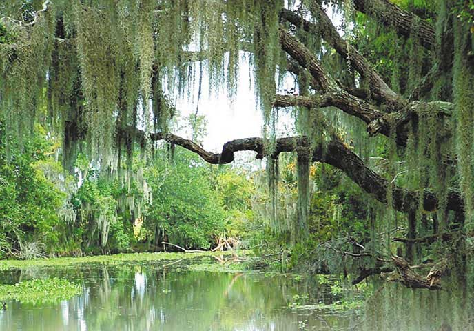 Louisiana Snowbird Destination