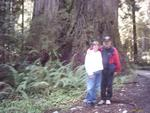 Our trip to the Redwoods