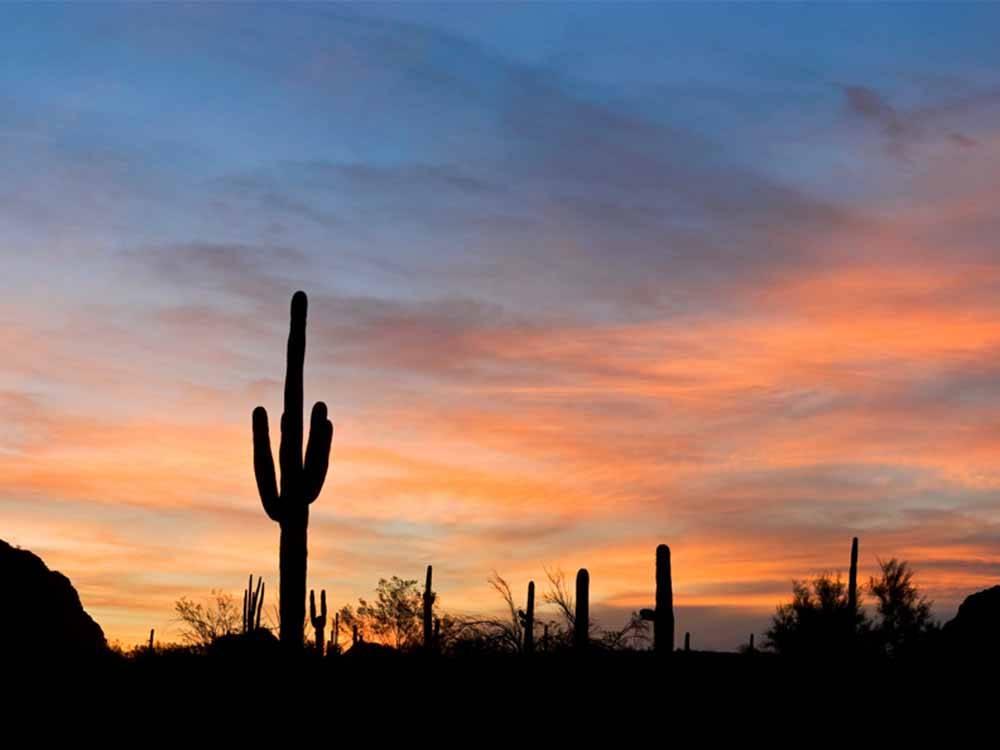 Desert Shadows Rv Resort Phoenix Campgrounds Good Sam Club