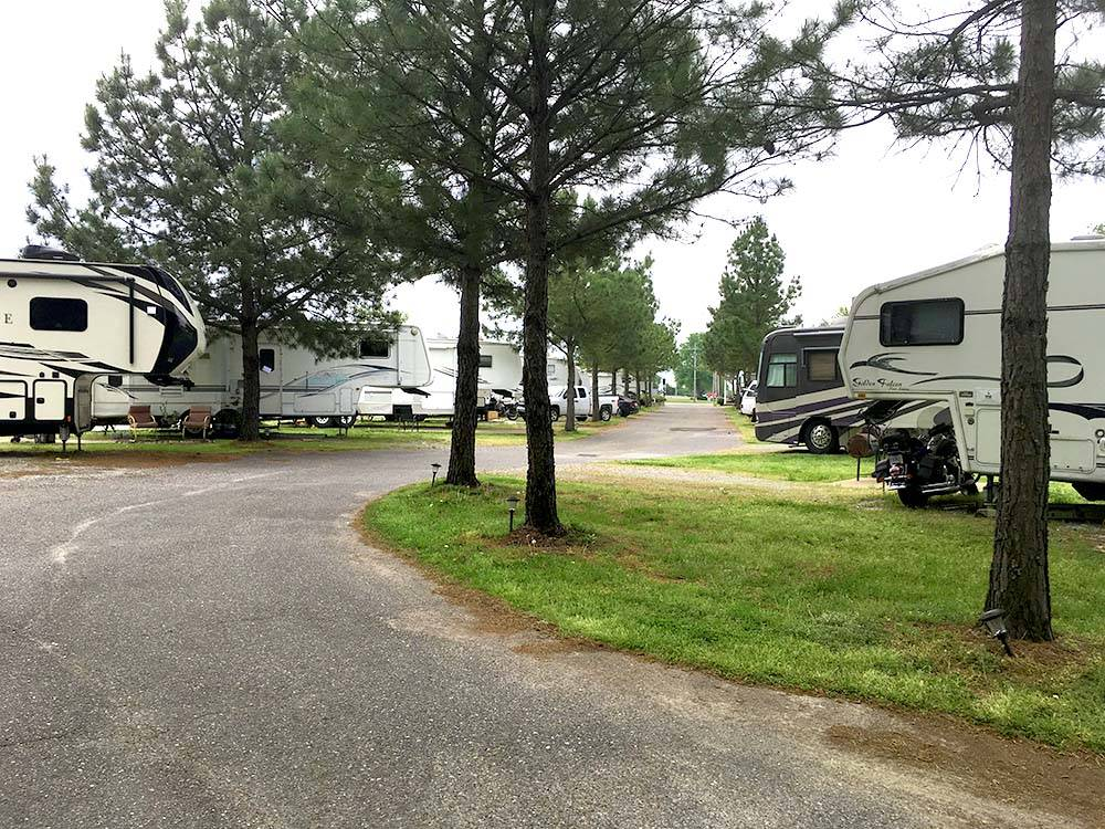 A curvy road with RV sites  pine trees on both sides at SOUTHAVEN RV PARK