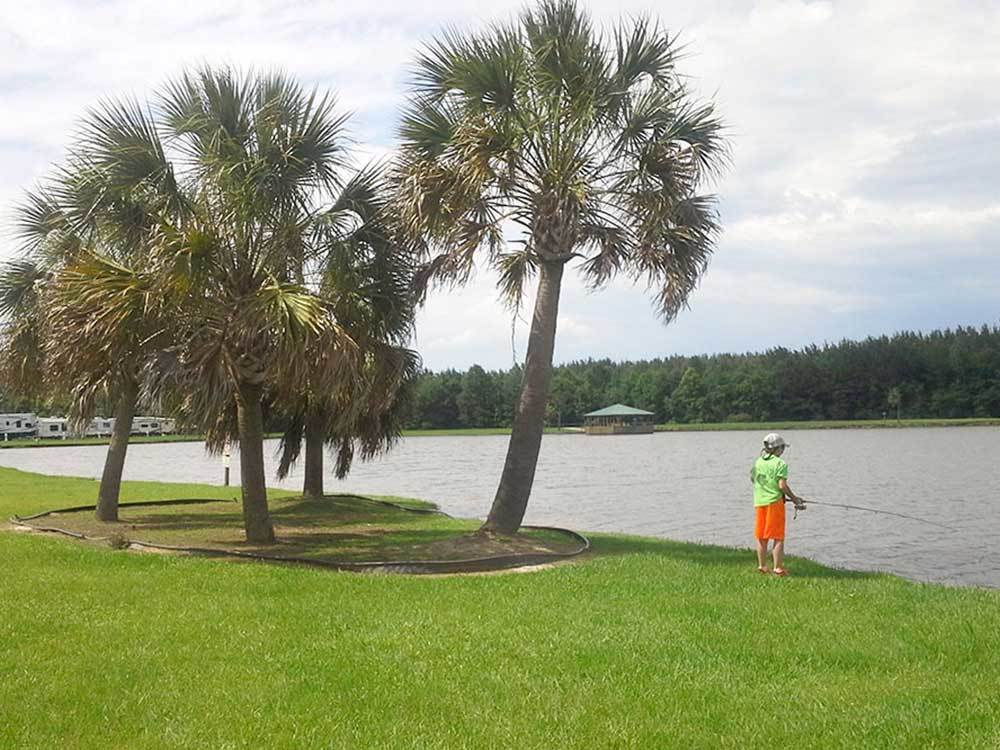 Boy fishing next to palm trees at NATALBANY CREEK CAMPGROUND  RV PARK