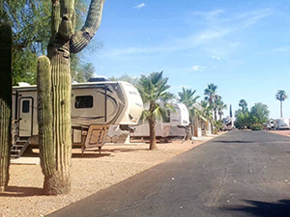 A group of adults in the pool at LAS COLINAS RV RESORT