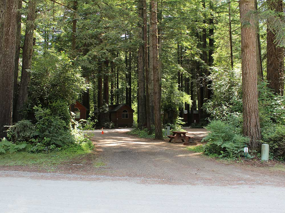 Gravel RV site under redwood trees at RAMBLIN REDWOODS CAMPGROUND