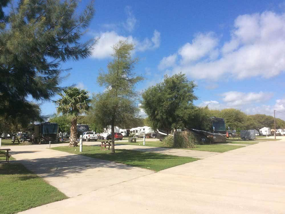 Trailers and RVs camping at ANCIENT OAKS RV PARK