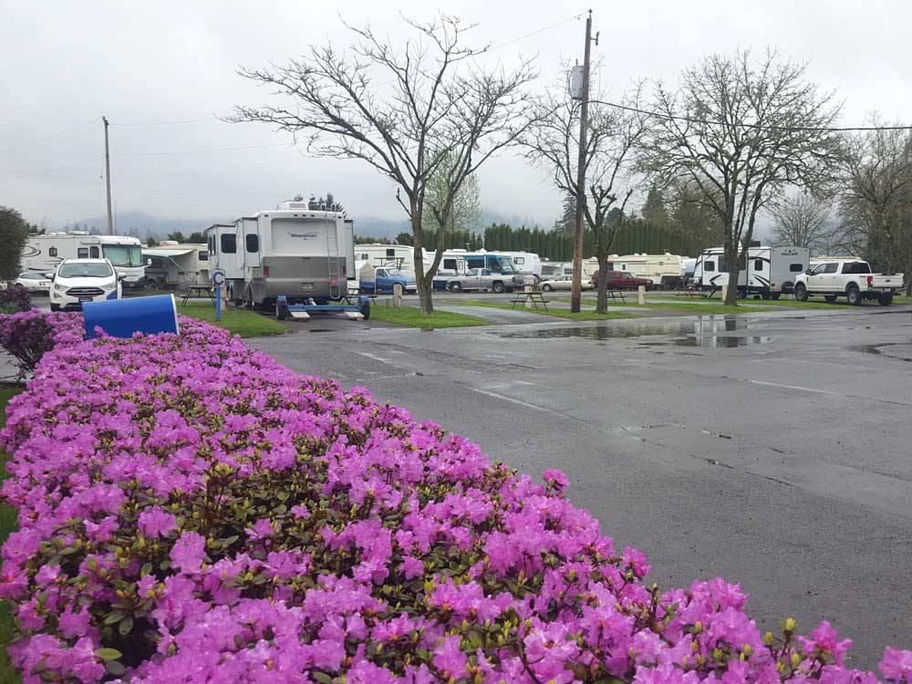 Eugene Kamping World Rv Park Coburg Campgrounds Good