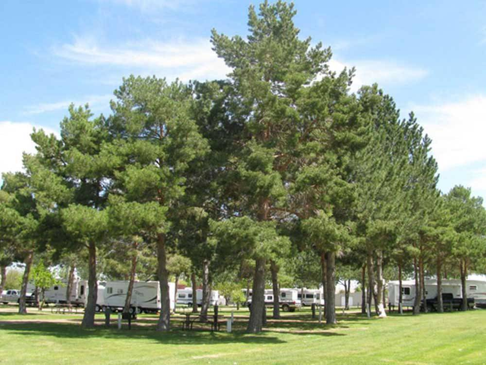RV sites with tall pine trees and grass at ANDERSON CAMP