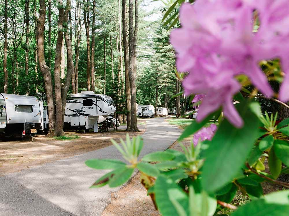 Trailers camping under tall trees at WILD DUCK ADULT CAMPGROUND  RV PARK