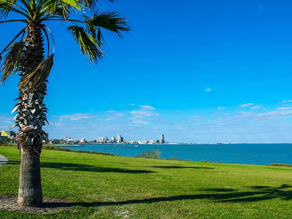 Grass area with palm tree with the city and ocean in background at PUERTO DEL SOL RV PARK