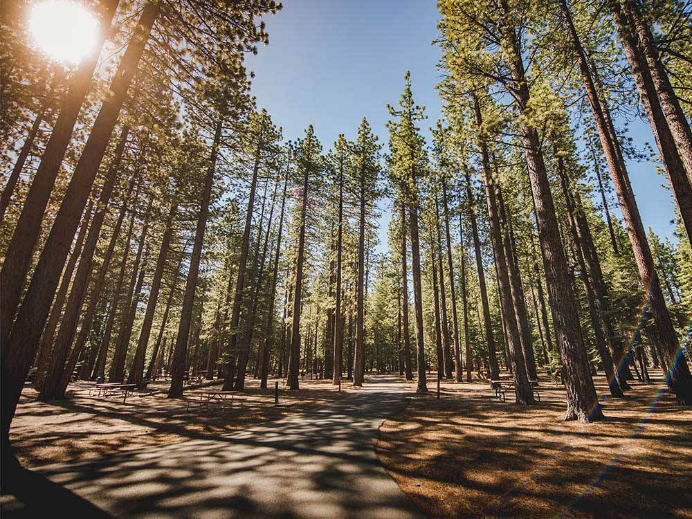 Road leading into campgrounds at TAHOE VALLEY CAMPGROUND