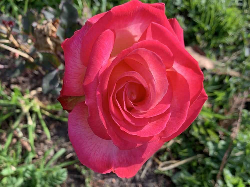 Napa Valley Expo Rv Park Napa Campgrounds Good Sam Club