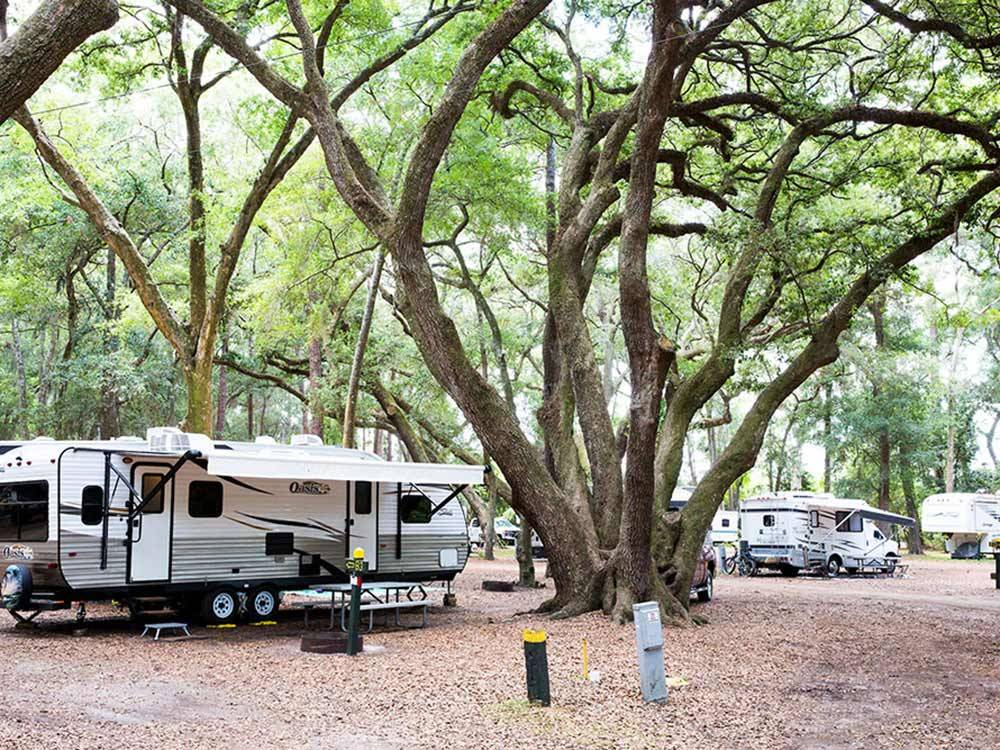 Huge tree towering beside white trailer at JEKYLL ISLAND CAMPGROUND