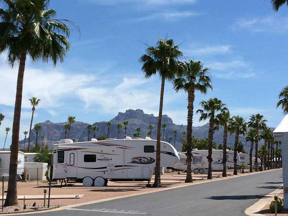 A row of RV sites with palm trees at WEAVERS NEEDLE RV RESORT