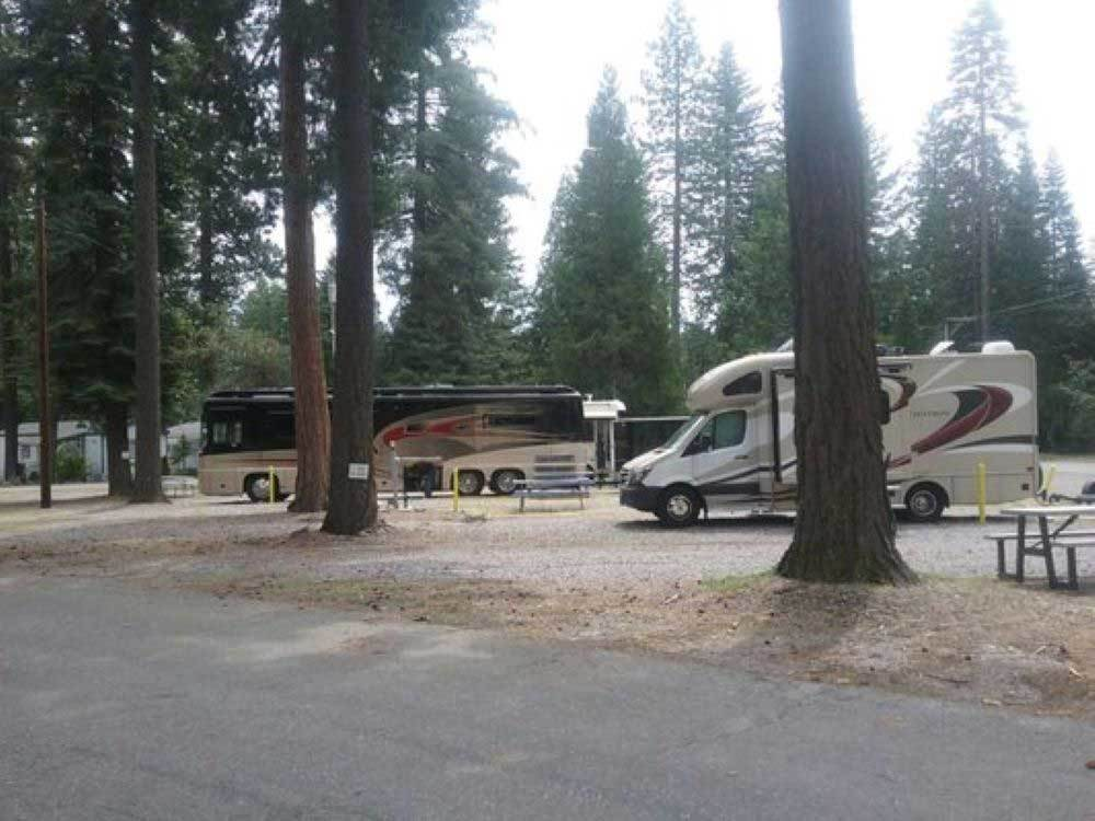RVs parked in gravel sites with pine trees at ABRAMS LAKE RV PARK