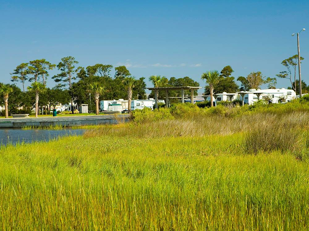 Trailers camping on the water with green weeds at GOOSE CREEK RESORT