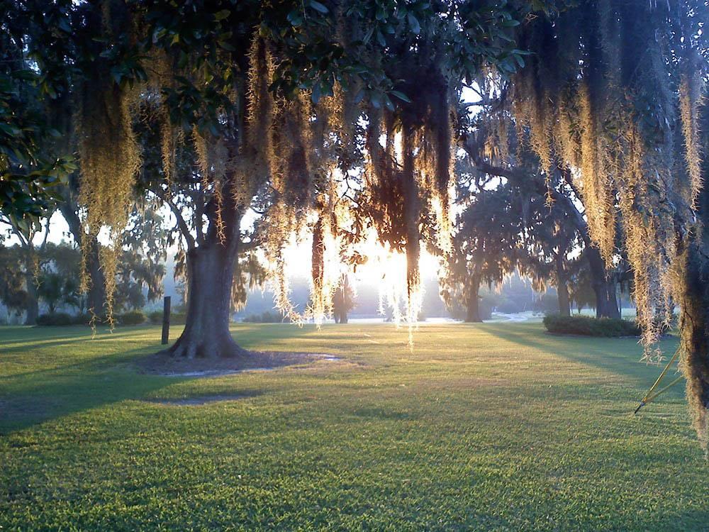 Oak Plantation Campground Charleston Campgrounds Good