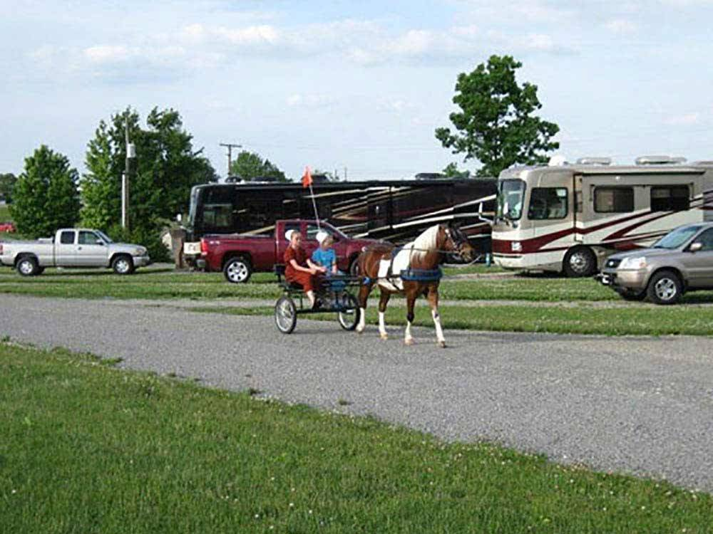 A horse pulling a couple of people around at SCENIC HILLS RV PARK