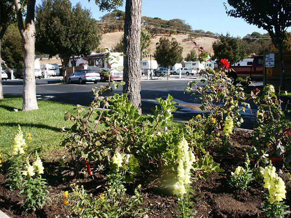 Novato Rv Park Novato Ca Rv Parks And Campgrounds In