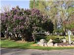 View larger image of Beautiful flowers and trees at SNAKE RIVER RV PARK AND CAMPGROUND image #5