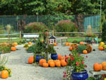 View larger image of Pumpkin patch at RIVERDALE FARM CAMPSITES image #12