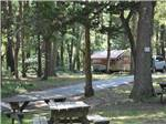 View larger image of Some of the wooded sites at CAPE ANN CAMP SITE image #6