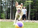 View larger image of Dog playing with ball at LAKE GEORGE RV PARK image #2