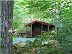 View larger image of One of the rustic rental cabins at MAMA GERTIES HIDEAWAY CAMPGROUND image #5