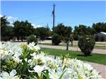 View larger image of Flowers at campground at SUNNY ACRES RV PARK image #9