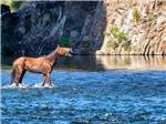 View larger image of A horse walking in a river at WESTERN ACRES image #6