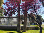 View larger image of Trees in front of office at THE RV PARK AT THE PIMA COUNTY FAIRGROUNDS image #11