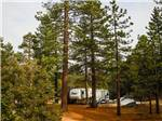View larger image of Trailer at IDYLLWILD RV RESORT image #7