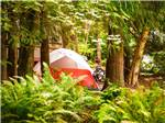 View larger image of Tent and trailer camping at CHEHALIS RESORT image #3