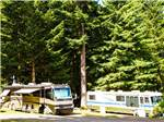 View larger image of RVs camping  at PARADISE THOUSAND TRAILS RESORT image #5