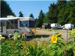 View larger image of RVs and trailers at campgrounds at SEASIDE RV RESORT image #1