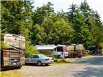 View larger image of RVs camping  at SOUTH JETTY RV  CAMPING RESORT image #6