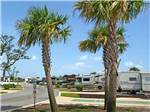 View larger image of Palm trees and RVs at SANTA ROSA WATERFRONT RV RESORT image #4