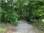View larger image of Tree lined path at BIG CREEK RV PARK image #7