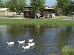 View larger image of Ducks on the lake at I 35 RV PARK  RESORT image #3