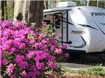 View larger image of Two fifth wheel trailers parked next to a pink flower bush at BILTMORE RV PARK image #4