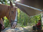 View larger image of Horse at campground at GEORGIA STATE PARKS  HISTORIC SITES image #6