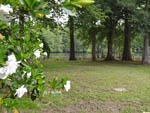 View larger image of Gardenias at CYPRESS CAMPING RESORT image #5