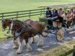 View larger image of Campers riding in buggy at GRAND OAKS RESORT image #2