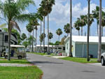 View larger image of Paved road leading through grounds with palm trees on both sides at ORANGE HARBOR CO-OP  RV RESORT image #3
