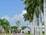 View larger image of Paved road leading through grounds with tall palm trees alongside at ORANGE HARBOR CO-OP  RV RESORT image #6