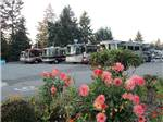 View larger image of RVs parked at campground at WASHINGTON LAND YACHT HARBOR RV PARK  EVENT CENTER image #2