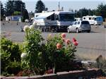 View larger image of Man walking his dogs at WASHINGTON LAND YACHT HARBOR RV PARK  EVENT CENTER image #4