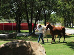 View larger image of Lady walking horses at LITTLE TURTLE RV  STORAGE image #8