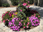 View larger image of Flowers at LAKE ROUSSEAU RV  FISHING RESORT image #4