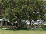 View larger image of Hammocks and wooden chairs around a large tree at BRAZORIA LAKES RV RESORT image #5