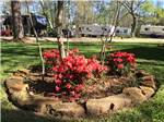 View larger image of Blooming red flower bed in grass at MAGNOLIA FOREST RV PARK image #4